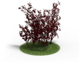 3d outdoor shrub