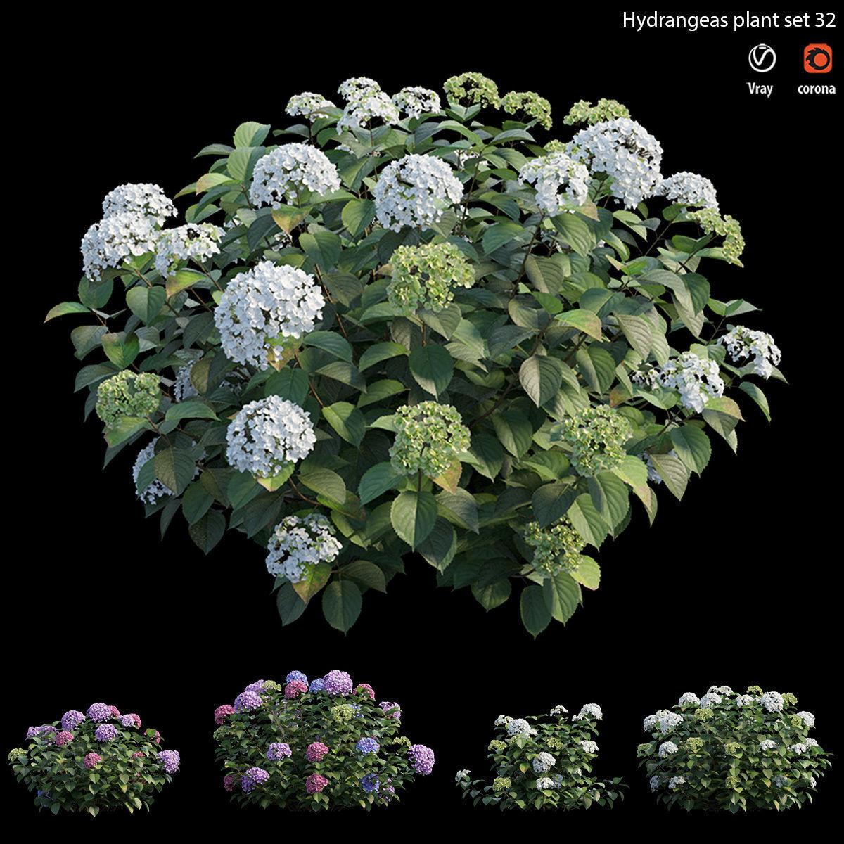 Hydrangea Plant set 32