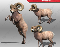 Ram Animated 3D