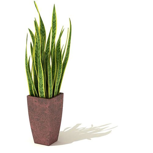 potted plant   decorative 3d model  1