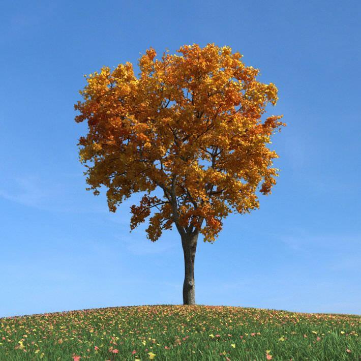 Gold Leafy Elm Tree