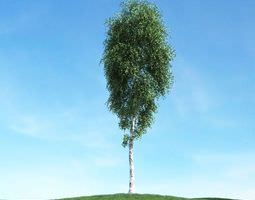 Tall Birch Tree 3D model
