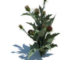 flowering thistle weed 3d