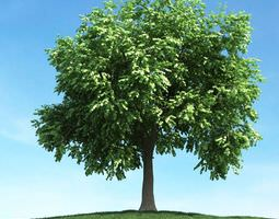 Large Leafy Tree 3D model