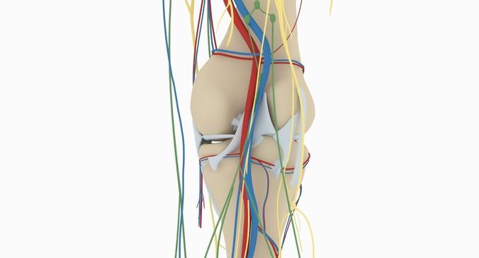 Knee anatomy 3d model cgtrader knee anatomy 3d model max obj 3ds fbx ma mb mtl 5 ccuart Images