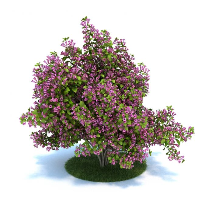 Purple flower bush 3d model cgtrader purple flower bush 3d model obj mtl 1 mightylinksfo