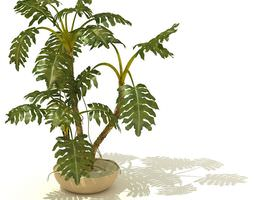 3D Potted Tropical Indoor Plant