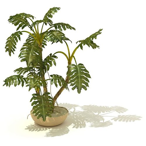 potted tropical indoor plant 3d model  1