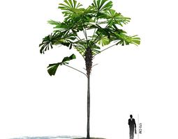 3D model Plant Tall Tropical