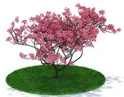 3D Pink Oriental Cherry