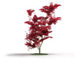 3d red leafed tree