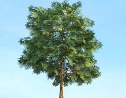 Green Leaf Tree plant 3D