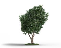 Tree With Branches And Leaves 3D model