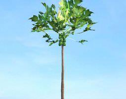 3D model Green Fruiting Tree