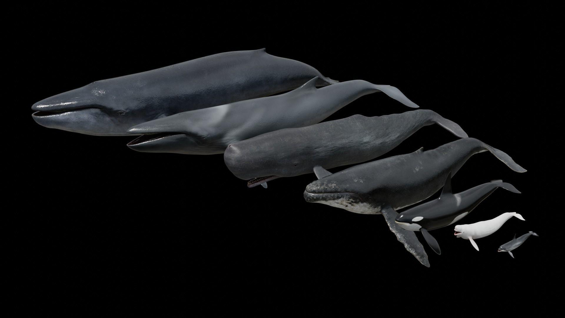 Cetaceans dolphins whales