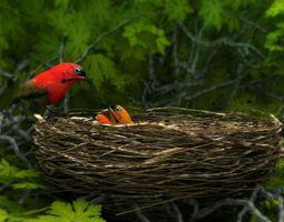 3d model birds weth nest