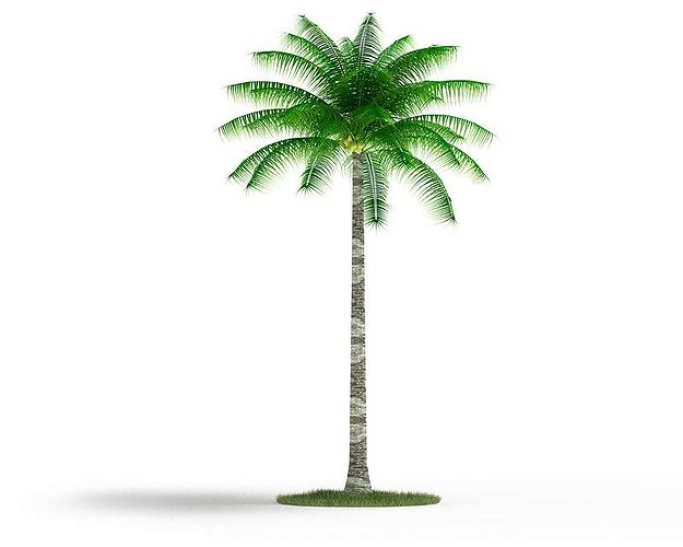 Mature Palm Tree 3D model