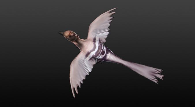 hoopie bird 3d model obj mtl 1