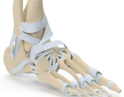 Foot Skeleton 3D model