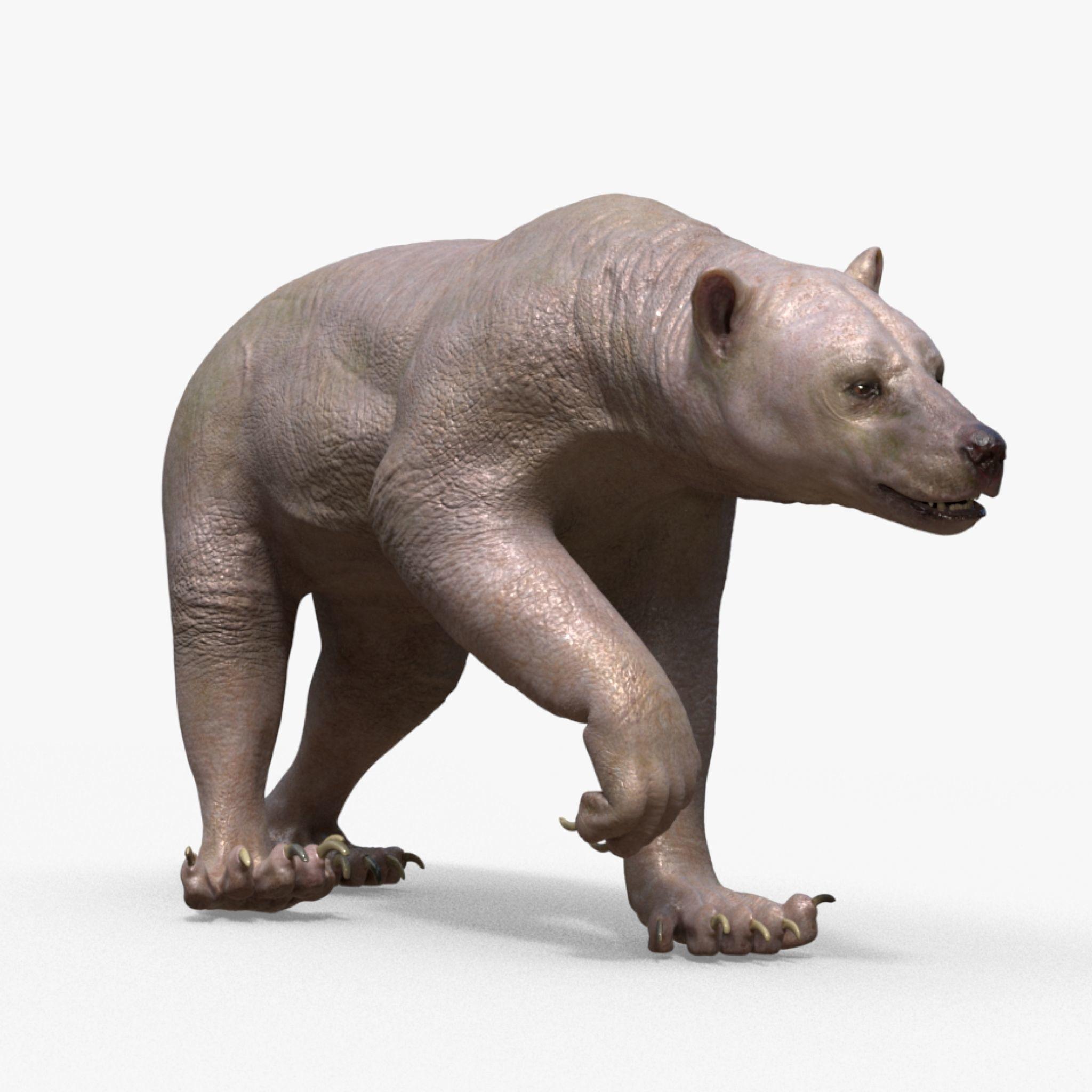 Bear Skin Rigged