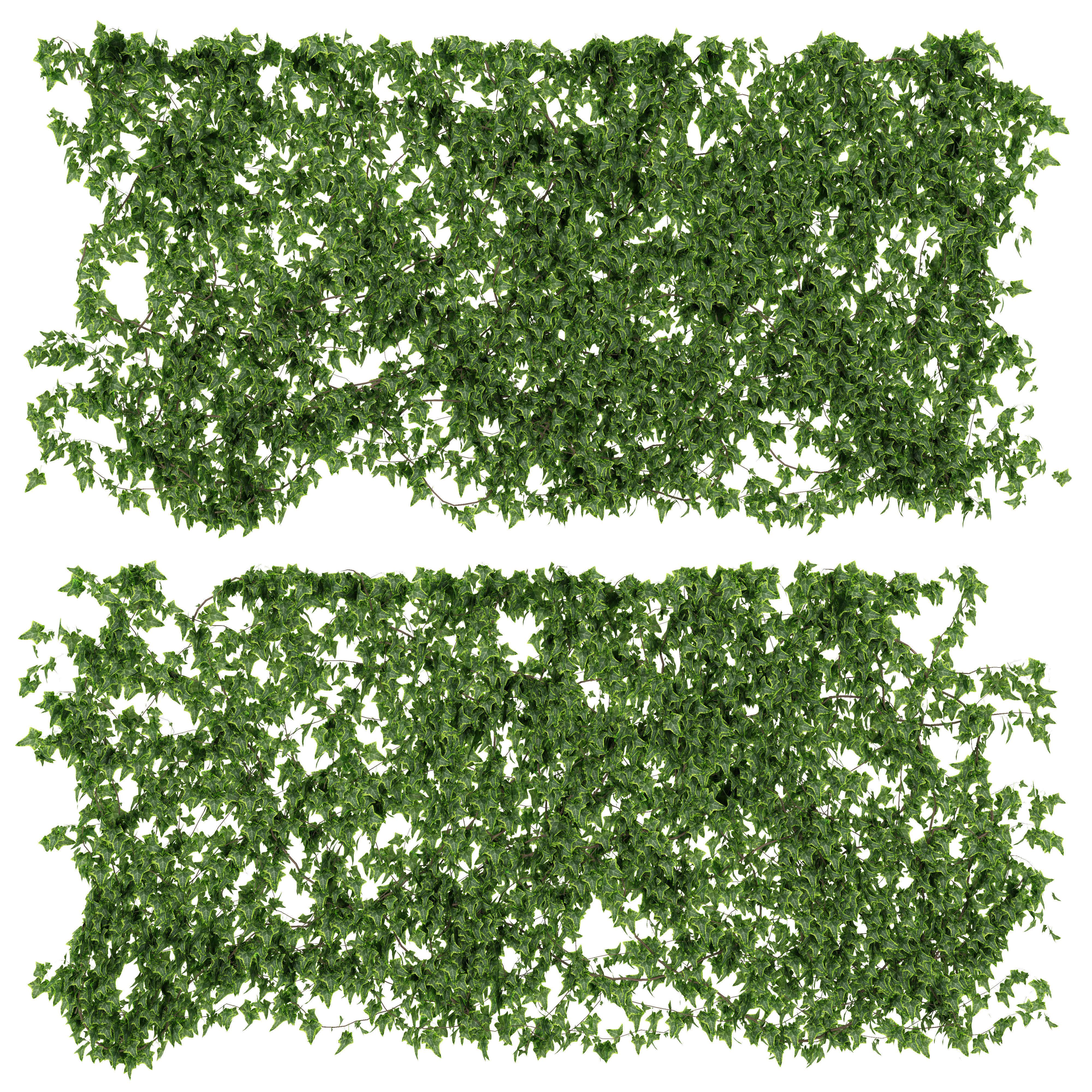 Ivy walls 2 models
