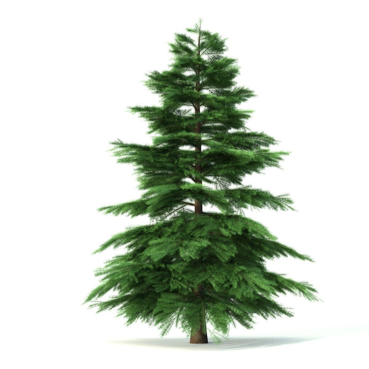 Fir tree - animation of growth 3D model animated for Pine Tree Animated  300lyp