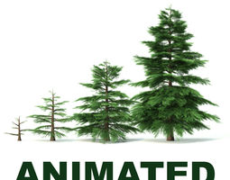 animated fir tree - animation of growth 3d