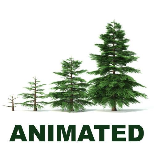 fir tree - animation of growth 3d model animated max obj fbx c4d lwo lw lws 1