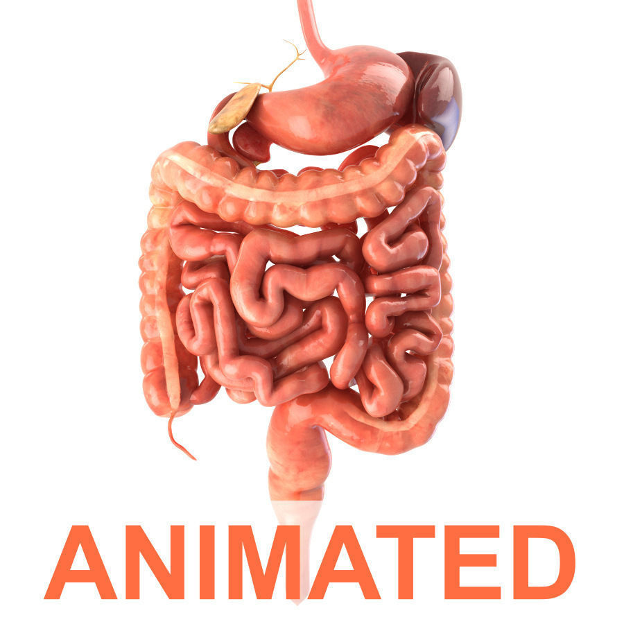 Digestive system Animated