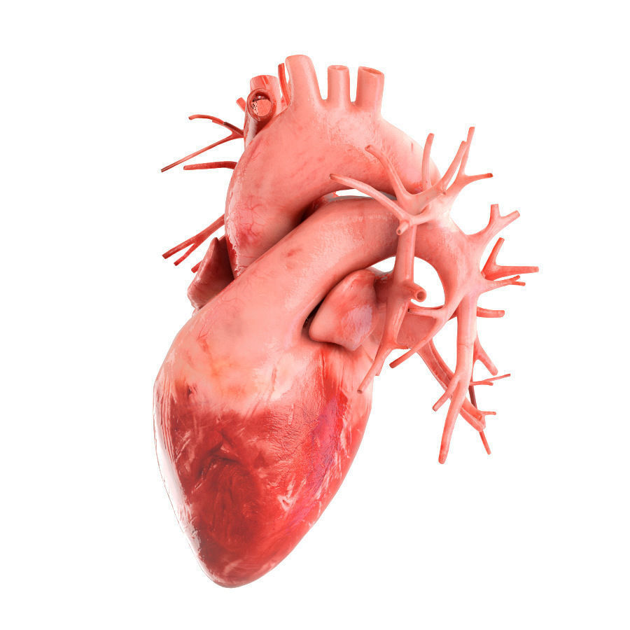 Human Heart Animated V3 With Interior And Animation 3d Model