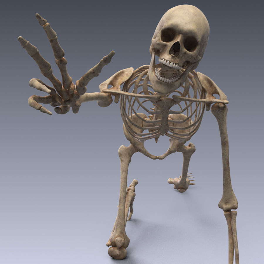 3D model Human skeleton rigged VR / AR / low-poly rigged animated ...