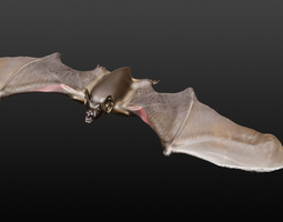 3D model VAMPIRE BAT wildlife-challenge