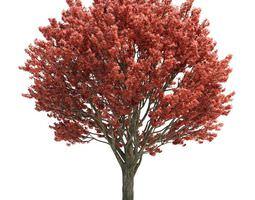 pink leaf tree 3d