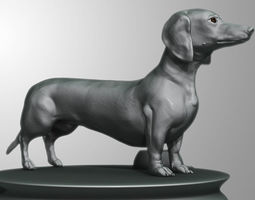 Detailed Dachshund Dog 3D model
