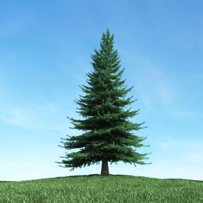 large green pine tree 3d cgtrader