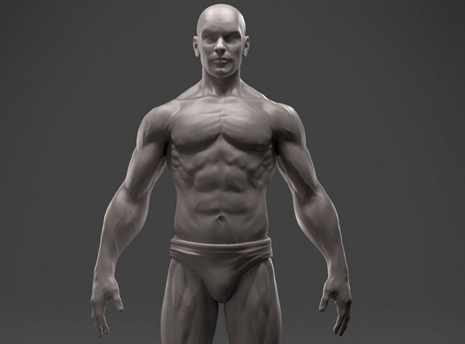 male anatomy sculpture 3d model stl 1