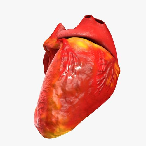 animated realistic human heart - medically accurate 3d model low-poly animated obj 3ds fbx c4d dxf stl 37