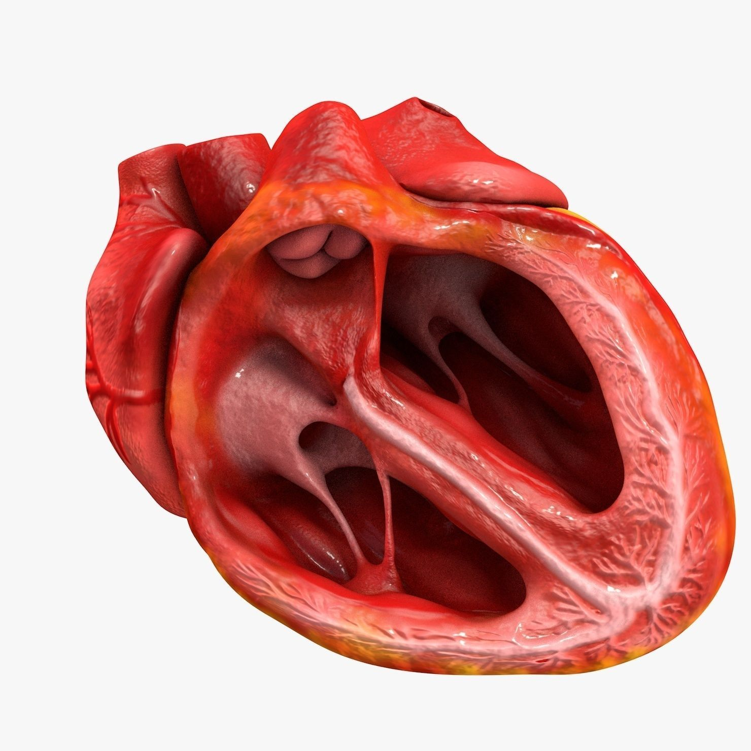 Animated human heart - photo#22