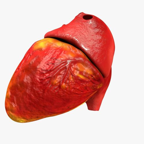 animated realistic human heart - medically accurate 3d model low-poly animated obj 3ds fbx c4d dxf stl 31