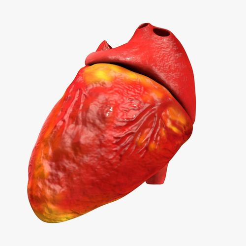animated realistic human heart - medically accurate 3d model low-poly animated obj 3ds fbx c4d dxf stl 36