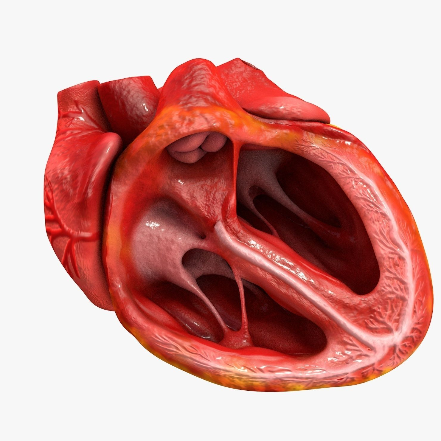 Animated human heart - photo#54