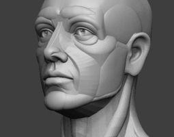 planar simplified male head  3d model stl ztl