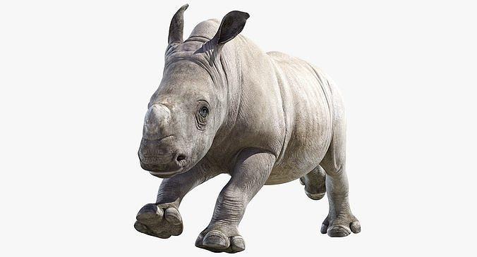 Rhino Baby Animated