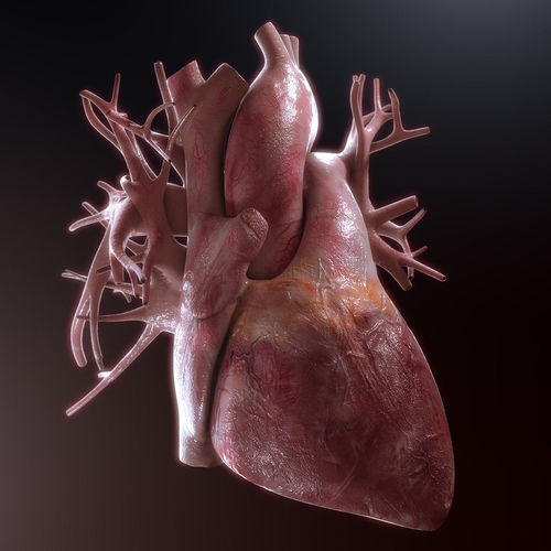 human heart high quality 3d model max obj fbx 1
