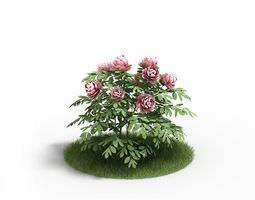 3D Pink Rose Bush