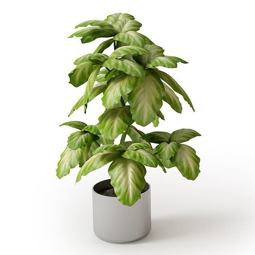 3d Model Large Potted Indoor Plant Cgtrader - Www imagez co