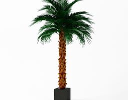 Artificial Palm Tree 3D