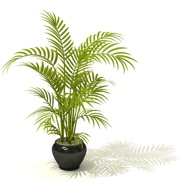 Tall Potted Palm Plant 3D Model | CGTrader.com