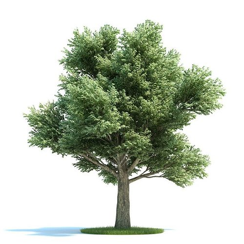 large green tree 3d model  1