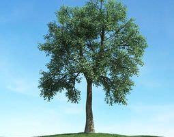 Green Leafy Tree 3D